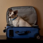 Dog for Air Travel